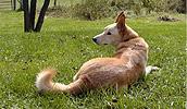 Karolinos šuo informacija,paveiksliukai,vardai,kaina