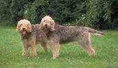 Ūdrinis šuo informacija,paveiksliukai,vardai,kaina